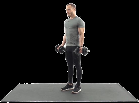 Упражнения для рук с гантелями. Упражнения с гантелями на бицепс, трицепс и предплечье.