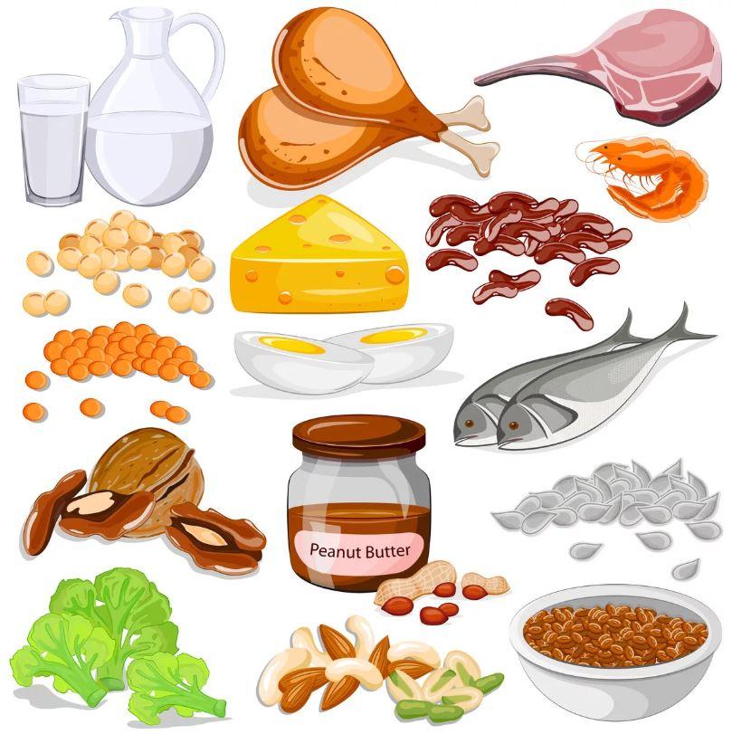Какой белок лучше? Аминокислотный состав, усвоение.