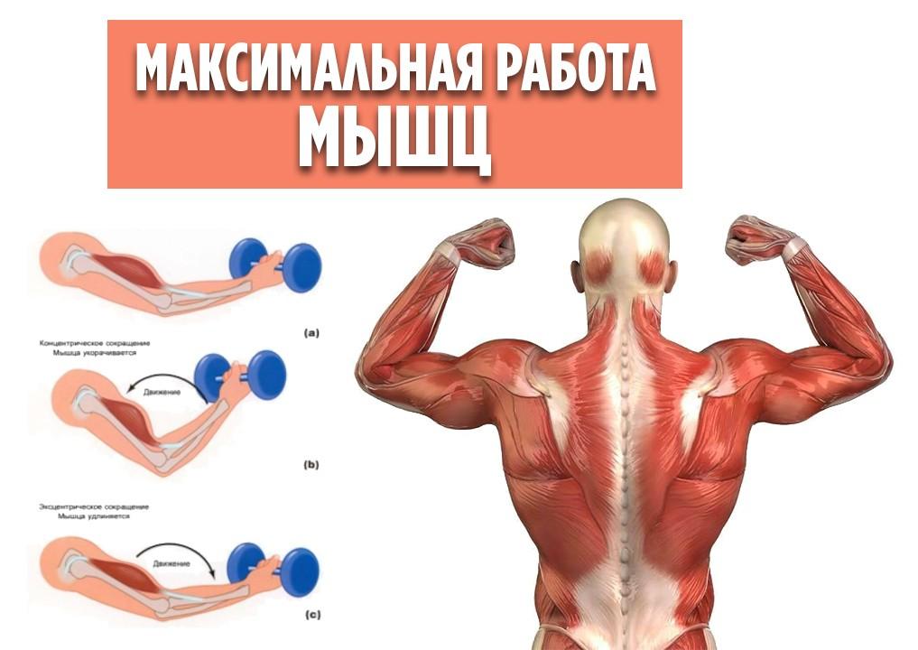 Максимальное напряжение мышц