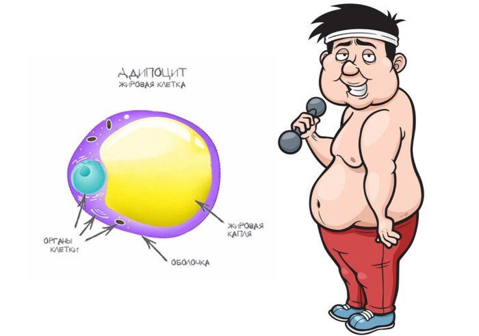 Почему не получается похудеть. Главная проблема.