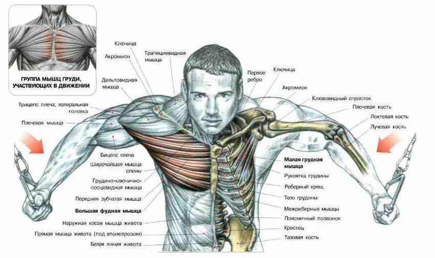 Предварительное утомление мышц